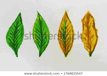 新しい 孤立した 緑の葉 2 白 ストックフォト © Ansonstock
