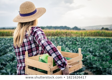 Harvest vegetables Stock photo © trgowanlock