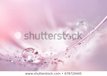 transparent water drops on feather stock photo © ansonstock