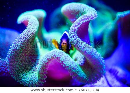 Subaquático vida tropical cena branco espaço Foto stock © dayzeren