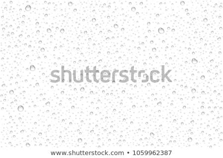 chute · feuille · pointe · goutte · d'eau · vert · usine - photo stock © cookelma