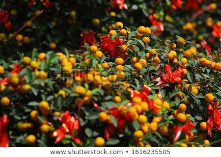 Kumquat 15 Stock photo © LianeM
