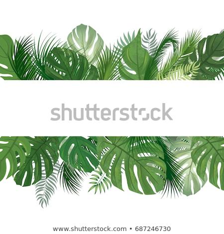 Fanfare Dschungel Vegetation natürlichen Vollbild Stock foto © prill