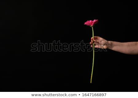 Rosa plantas margarida flor estufa Foto stock © ivonnewierink