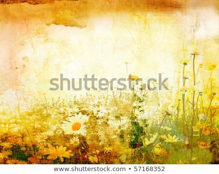 grunge · keret · százszorszép · papír · öreg · fényképkeret - stock fotó © marimorena