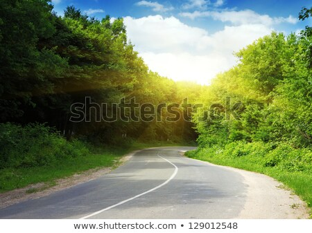 Asphalt road running through forest Stock photo © ozaiachin