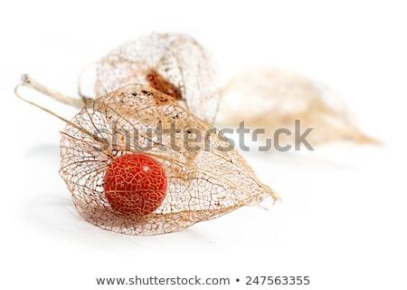 гнилой китайский фонарь мочевой пузырь Вишневое черный Сток-фото © prill