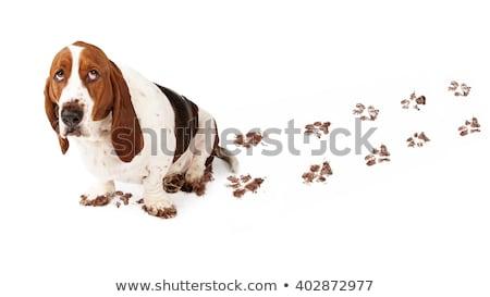 hond · patroon · Geel · naadloos · grappig · huisdieren - stockfoto © pcanzo