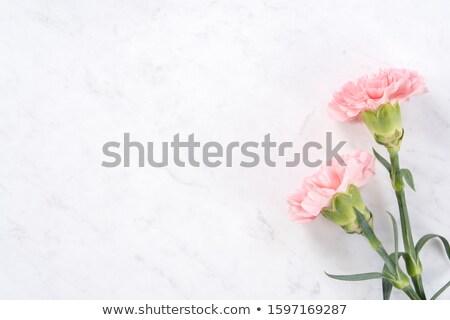 春 ピンクの花 緑 白い花 勾配 白 ストックフォト © marinini