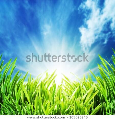vert · feuillage · bleu · naturelles · horizons · printemps - photo stock © tolokonov