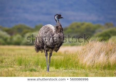 Faccia erba natura uccello piedi Foto d'archivio © maros_b