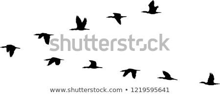 repülés · madarak · Banglades · víz · szem · kék - stock fotó © bdspn