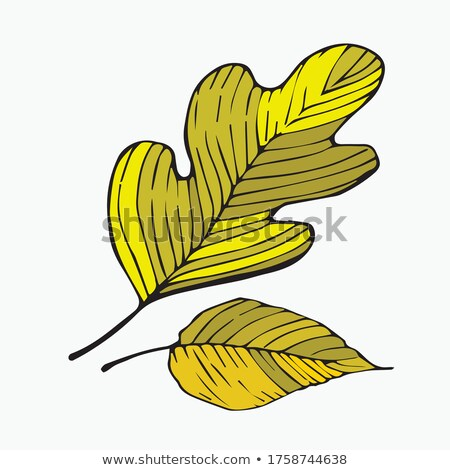 Different shades of yellow birch leaves Stock photo © Mps197
