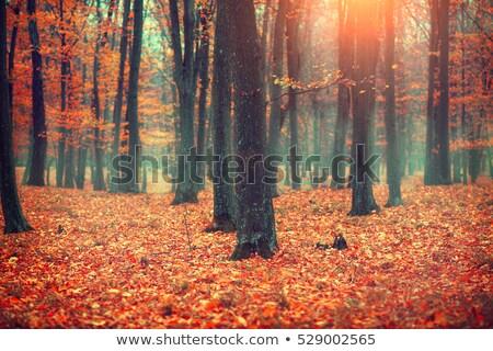 туманный осень лес рассвета Сток-фото © nature78