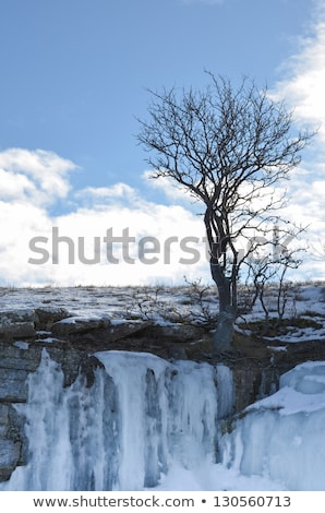 Icy limestone cliffs at the coast of the swedish island Öland in the Baltic sea. Stock photo © olandsfokus