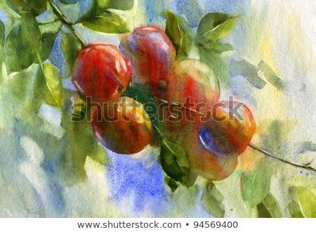 Pomme peinture verger bois chevalet fruits Photo stock © stevanovicigor