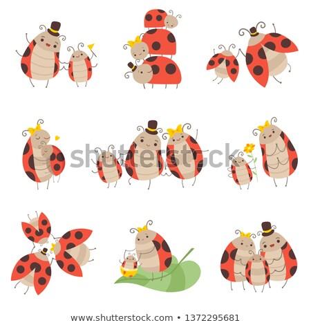 Stock photo: father ladybug on flowers