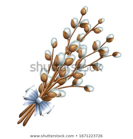 ива белый дерево весны природы Сток-фото © nailiaschwarz