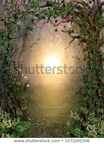 Gizlenmiş orman yol ahşap manzara Stok fotoğraf © mady70