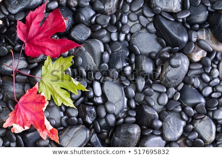 three conceptual leaves on black river rocks stock photo © ozgur