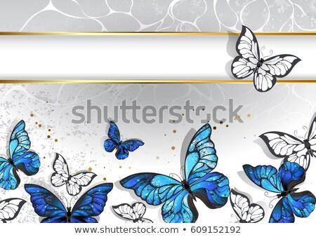 Wąski banner motyle prostokątny złota ramki Zdjęcia stock © blackmoon979