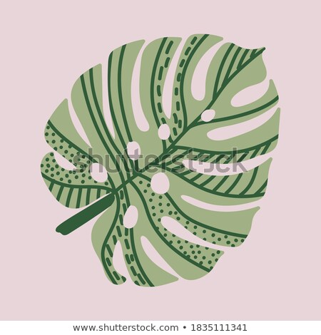Tropical design with monstera palm leaves and plants on green ba Stock photo © BlueLela