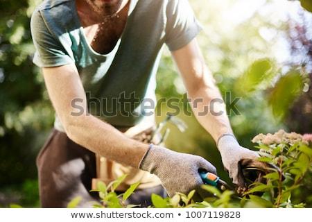 Man in garden planting Stock photo © IS2
