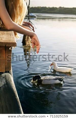 人 · を見て · 鳥 · フォアグラウンド · 自然 - ストックフォト © is2