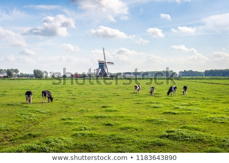 Rural summer landscape Holland  Stock photo © Olena