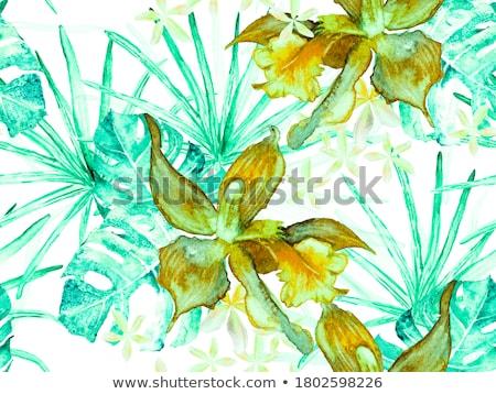 trópusi · smaragd · minta · orchidea · madár · vektor - stock fotó © PurpleBird
