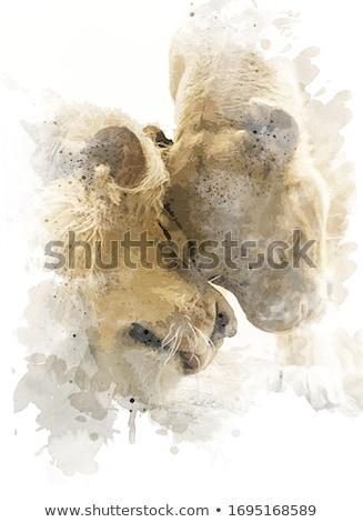 Cartoon Lioness Love Stock photo © cthoman
