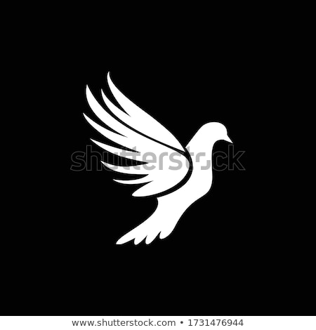 white dove freedom symbol vector icon logo stock photo © blaskorizov