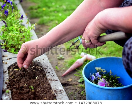 Unrecognizable woman ripping out weeds in a garden using her hands. Stock photo © X-etra