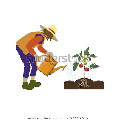 Gazdálkodás férfi locsolókanna vektor gazda növekvő Stock fotó © robuart