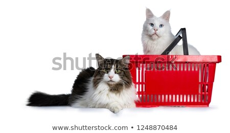 Duo of two cats, one sitting in red shopping basket Stock photo © CatchyImages