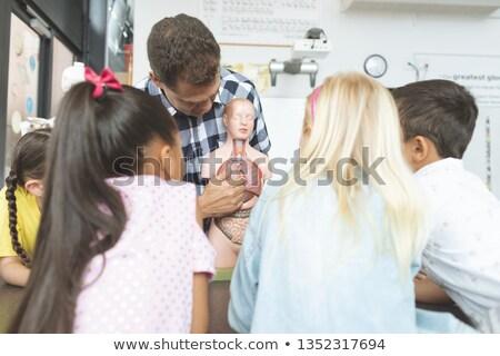 Hátsó nézet iskola gyerekek néz csontváz tanár Stock fotó © wavebreak_media