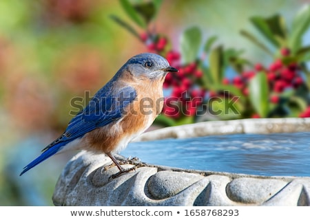 Niebieski Język zabawy zwierząt prezentacji uśmiechnięty Zdjęcia stock © dagadu