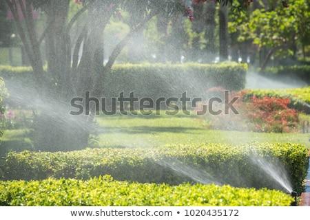 Irrigation parc herbe lit de fleurs nature été Photo stock © eltoro69