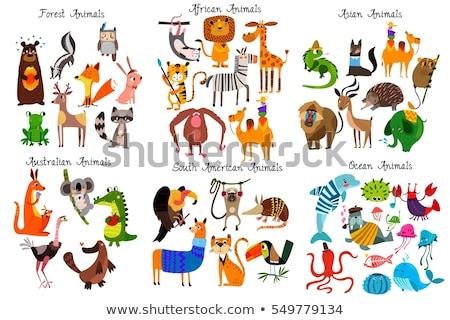 rajz · afrikai · állatok · szett · fehér · terv - stock fotó © jenpo
