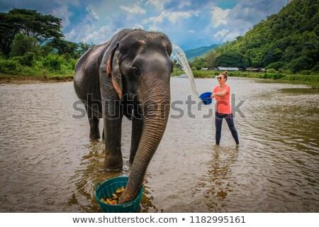 Elefánt etetés vad bokor víz utazás Stock fotó © Donvanstaden
