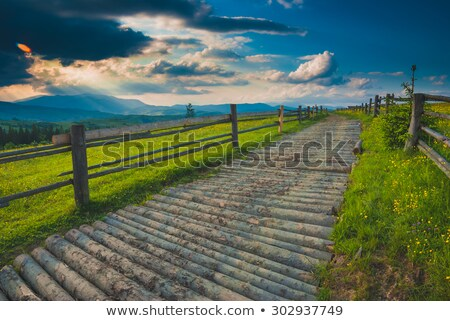 logging road at spring stock photo © tainasohlman