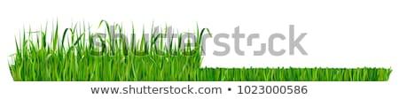 Vág fű konténer fűnyíró tele gép Stock fotó © MKucova