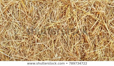 straw background stock photo © mkucova
