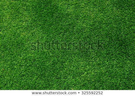 Golf Grass Stock photo © hlehnerer