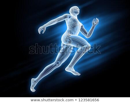 masculino · muscular · anatomia · ver · ilustração - foto stock © elenarts