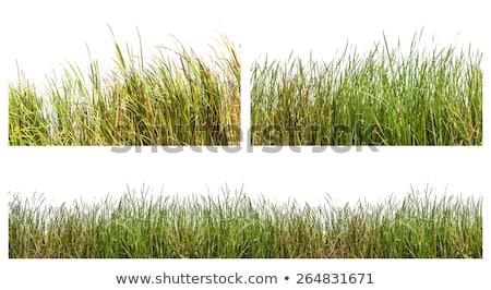 трава солнце высокий цветок весны Сток-фото © Kayco