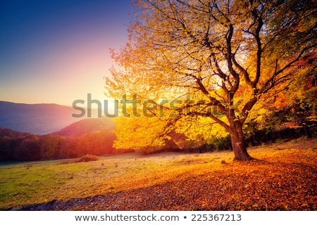 Wonderful golden autumn. Stock photo © lypnyk2