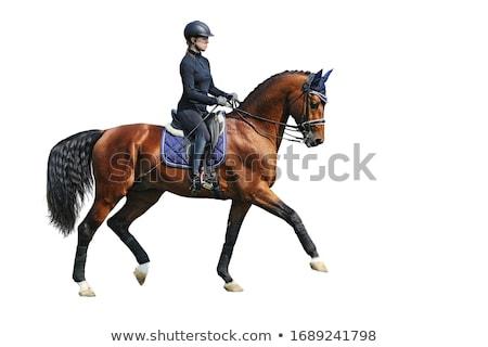 girl sportsman rides on horse  Stock photo © OleksandrO