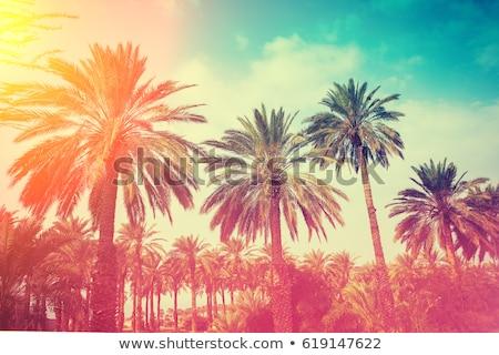 plaj · tropikal · Florida · gün · palmiye · ağaçları · ağaç - stok fotoğraf © o_lypa