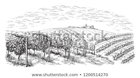Tinta rajz dombok stílus rajz kéz Stock fotó © cidepix
